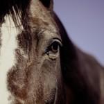 Torfæruhjól fældi hest og knapi féll af baki