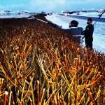 Vorhreinsun 24.-28. apríl – Reykjanesbær fjarlægir það sem til fellur